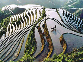 Agriculture china agriculture for Define terrace farming