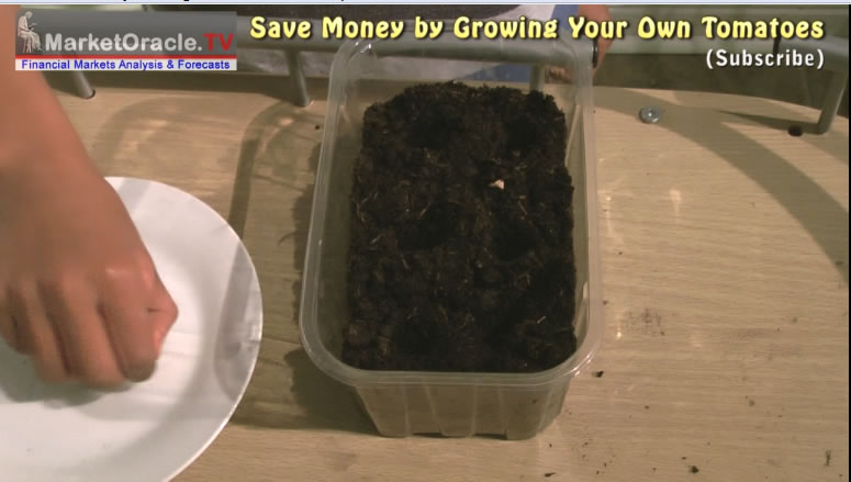 how to grow tomatoes step by step pdf