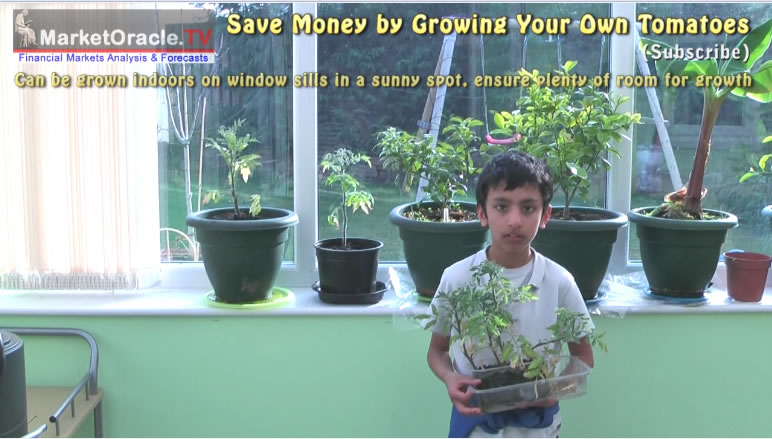 How To Save Money By Growing Your Own Homegrown Tomatoes
