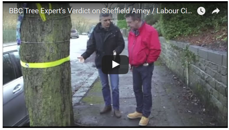 BBC Tree Expert's Verdict on Sheffield Amey / Labour City Council Tree Felling's