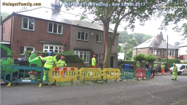 Sheffield Street Trees - Amey / Labour City Council Tree Felling 2017