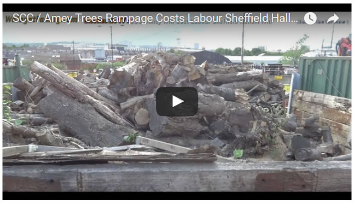 Sheffiled City Council / Amey Trees Rampage Costs Labour Sheffield Hallam Election Win