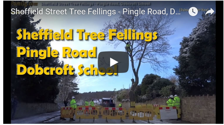 Sheffield Street Tree Fellings - Pingle Road, Dobcroft School Night Fellings