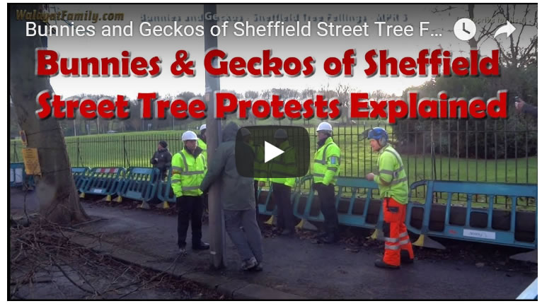 Bunnies and Geckos of Sheffield Street Tree Fellings Protests Explained