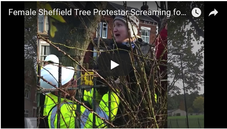 Shocking Video of Female Sheffield Tree Protestor Screaming for Police Help to Stop Alleged Assault