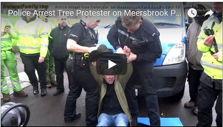 Police Arrest Tree Protester on Meersbrook Park Road, Sheffield