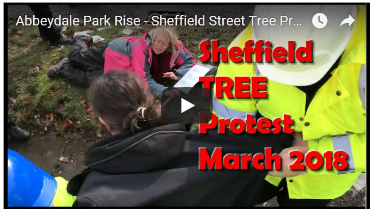 Abbeydale Park Rise - Sheffield Street Tree Protests March 2018