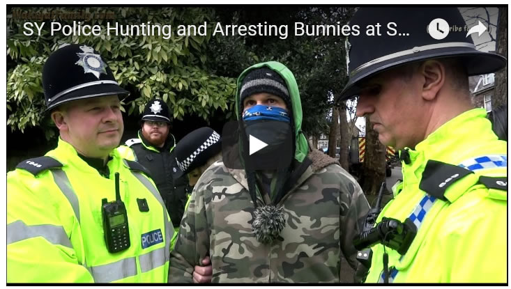 SY Police Hunting and Arresting Bunnies at Sheffield Street Tree Felling Protests