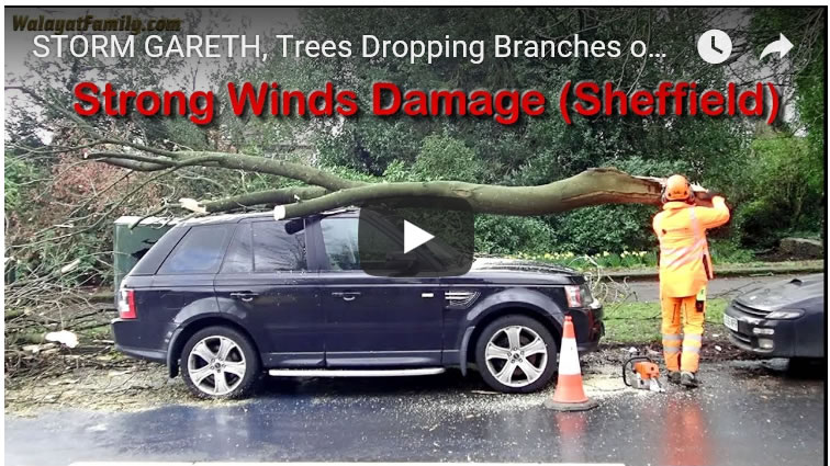 UK Weather SHOCK - Trees Dropping Branches onto Cars in Stormy Winds - Sheffield
