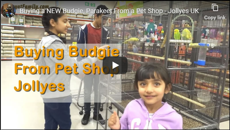 Buying a NEW Budgie, Parakeet From a Pet Shop - Jollyes UK