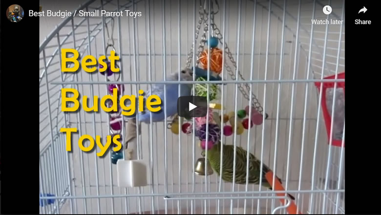Best Cheap Budgie / Small Parrot Toys