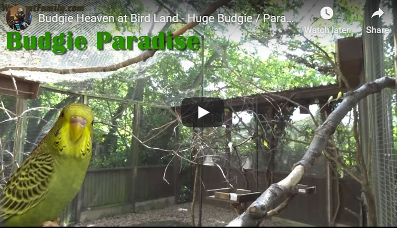 Budgie Heaven at Bird Land