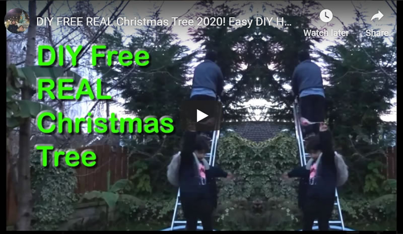 How to Get FREE REAL Christmas Tree 2020! Easy DIY Money Saving