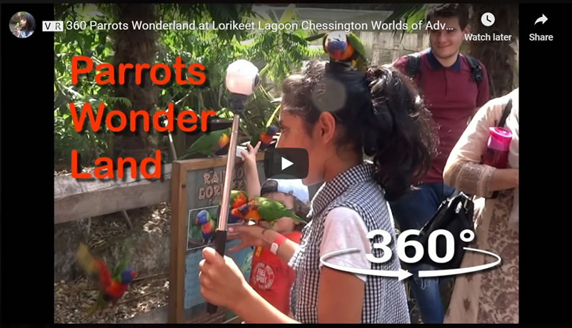 Life After Covid - ���� 360 Parrots Wonderland at Lorikeet Lagoon Chessington Worlds of Adventure