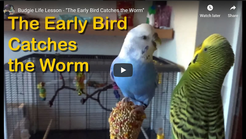 Life Lesson - The Early Bird Catches the Worm