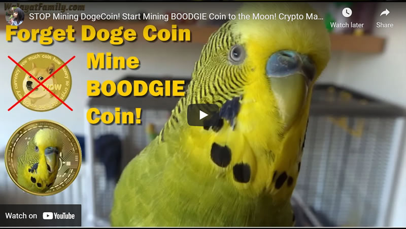 DogeCoin CRASH! Time to Start Mining BOODGIE Coin! Crypto Mania 2021